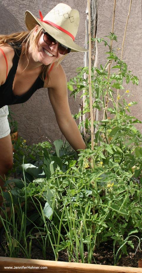 Vegetable_Yard4