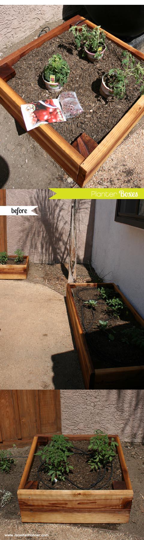 Veggtable_Yard_planted