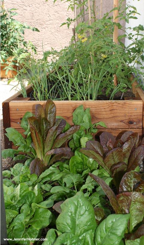 Vegetable_Yard3