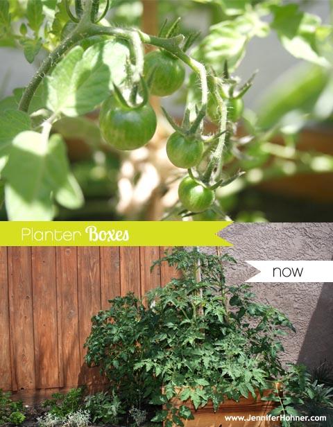Vegetable_Yard