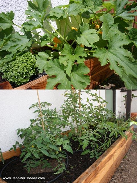 Vegetable_Yard2